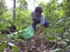 Castaña Amazónica