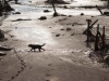 La localidad de Bento Rodrigues, en el municipio de Mariana, cerca a la ciudad de Belo Horizonte, capital del Estado de Minas Gerais, ha quedado completamente inundada por el barro tóxico de una mina de hierro cuyo embalse de desechos colapsó. | Foto AP