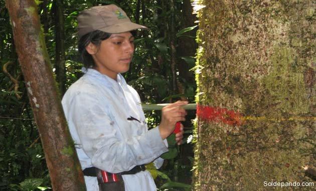 La catalogación de árboles como parte del estudio. | Foto cortesía Rainfor