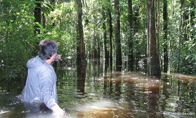 En las últimas décadas la selva amazónica actuó como un gran sumidero de carbono. | Foto cortesía Rainfor