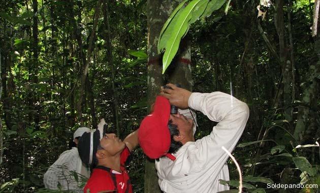 Uno de los equipos de investigación trabajando en un bosque amazónico de Bolivia. | Foto cortesía Rainfor