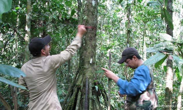 Los investigadores aplican tecnología del GPS para catalogar los árboles. | Foto Cortesía Rainfor