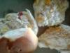 Un sándwich de pollo con mayonesa y tomate sería el causante de la emergencia sanitaria.