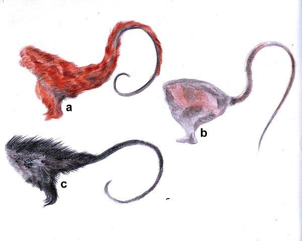 Ilustracion-Tecnica-pelos-en-la-cola