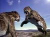 Smilodon-tigre-diente-de-sable