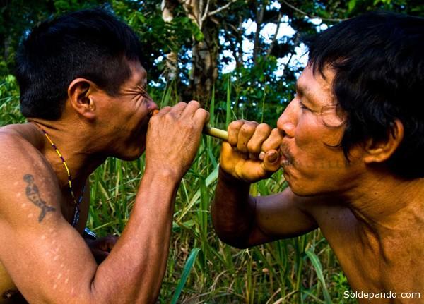 Pueblo de chamanes que rinden culto a la magia del bosque amazónico, los Matsés de Brasil y Perú se unen para defender su territorio.