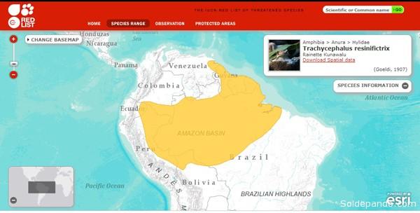 Habitat Rana Lechera Amazonica
