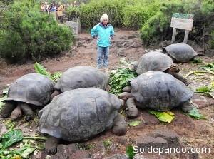 De acuerdo a la hipótesis de Charles Darwin las tortugas de Galápagos habrían podido llegar desde Sudamérica agarradas a troncos o encima de árboles.