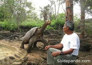 Las tortugas de Galápagos y amazónicas podrían tener un ancestro en común: el Chelonoidis.