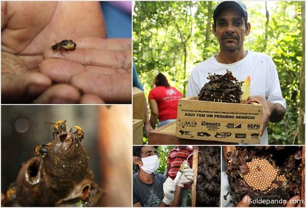 A Secretaria Estadual de Pequenos Negócios realizou uma capacitação para os novos apicultores da região do Alto Acre. | Foto Angela Peres