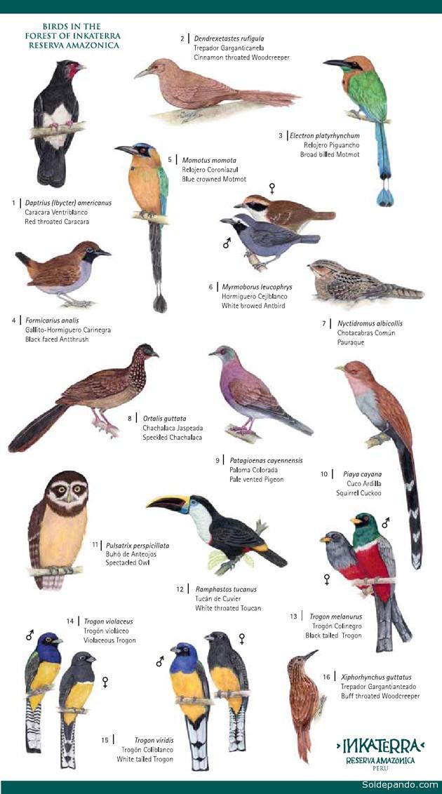 Aves Dentro el Bosque