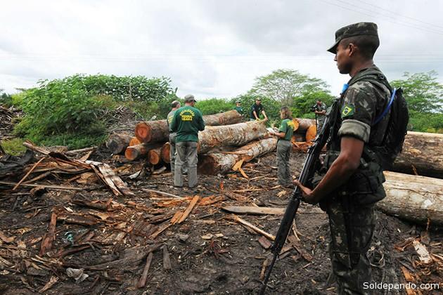 El ejército brasileño ha llegado a la zona para detener la tala ilegal alrededor de la tierra de los awás.   Foto ©Exército Brasileiro - Survival