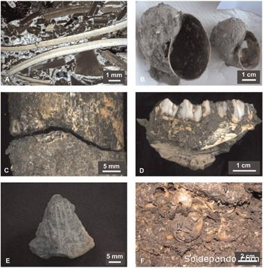 """Los análisis de radiocarbono aplicados al carbón indican que los grupos de cazadores-recolectores """"se establecieron en la región a principios del período del Holoceno, es decir, hace aproximadamente 10.400 años."""