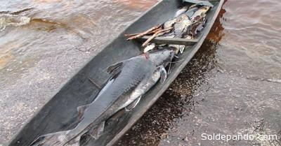 Actualmente algunos Nonuya, también pescadores, se dedican a la comercialización de bagre, el cual es vendido a los cuartos fríos de Puerto Santander y al municipio de Araracuara.