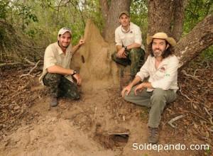 Equipo del armadillo gigante de izquierda a derecha: Gabriel Massocato, Danilo Kluyber y Arnaud Desbiez. | Foto: Kevin Schafer/Proyecto Armadillo Gigante del Pantanal.