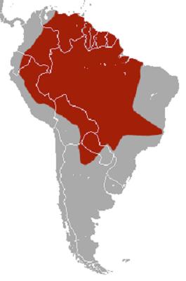 El hábitat del Armadillo Gigante se extiende a 12 países de América del Sur.