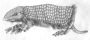 El Coseveru (Calyptophractus retusus) fue descubierto en 1859 por Herman Burmeister (naturalista de origen alemán), en la zona del Pari, Santa Cruz.   Ilustración: Victor Manuel Sossa