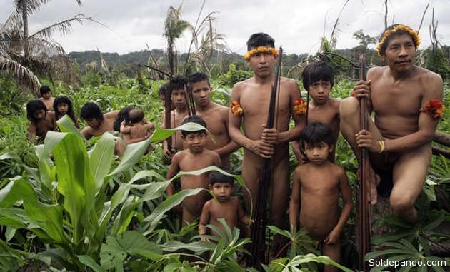 Tras una intensa campaña liderada por Survival, la presión ejercida sobre el ministro de Justicia de Brasil se hizo ineludible, y ordenó el despliegue de una operación para expulsar a los madereros del territorio del pueblo Awá en aislamiento voluntario.