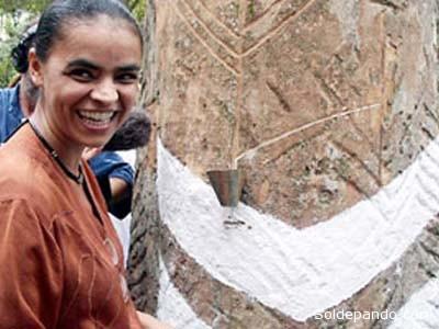 HISTORIA DE UNA SIRINGERA Maria Osmarina Marina Silva Vaz de Lima, conocida como Marina Silva, nació el 8 de febrero de 1958 en la ciudad de Rio Branco, capital del estado de Acre, pero vivió toda su infancia en una aldea de seringueiros llamada Breu Velho, en el Seringal (plantación donde hay árboles de caucho) Bagaço, a 70 km de Rio Branco. Sus padres, Pedro Augusto y María Augusta, tuvieron 11 hijos, de los que sobrevivieron apenas ocho. En su infancia trabajó en el campo junto con sus hermanas, pasando luego a la recolección de caucho. Cazaba, pescaba, y por fin ayudó a su padre a cancelar las deudas con el dueño del cultivo de caucho. A los catorce años aprendió las cuatro operaciones básicas de matemática, pues donde vivía no había escuelas. Tras ser alfabetizada y recibir la enseñanza básica, en 1981 se matriculó en la Universidad Federal de Acre. Fue en la universidad que descubrió el marxismo, y en 1985 se afilió al Partido Revolucionario Comunista, considerado semiclandestino por los militares. Inició su carrera política como concejal en el municipio de Rio Branco, en Acre, en 1988. Como activista ambientalista, fue compañera de lucha de Chico Mendes, y con él fundó la filial de la CUT en Acre en 1985. También en este año se hizo miembro del Partido de los Trabajadores (PT). El año siguiente, en 1986, se hizo candidata a diputada federal, pero no logró ganar la elección. Como concejal de Acre, causó una controversia, devolviendo beneficios financieros que los demás concejales recibieron. Con eso llegó a tener muchos adversarios políticos, pero la admiración popular también creció. En 1990, fue elegida diputada estatal. Se puede decir que es una de las principales voces del Amazonas, pues fue responsable por varios proyectos, entre ellos el de la regulación del acceso a los recursos de biodiversidad. En 2003, el presidente de Brasil Luiz Inácio Lula da Silva la nombró Ministra del Medio Ambiente. Dimitió en 2008, y en agosto de 2009 abandonó el Partido de l