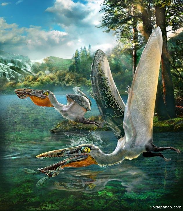 Ikrandraco avatar, pterosaurio hallado en China. | Imagen de Chuang Zhao