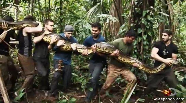 La anaconda cazada por Roselie y sus secueces, en el río Madre de Dios. | Foto Discovery
