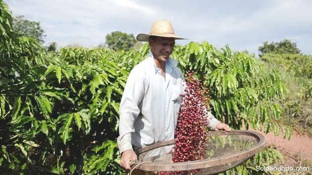 Rondônia tem 22 mil pessoas produzindo café em 87 mil hectares de terra | Foto Sandro André