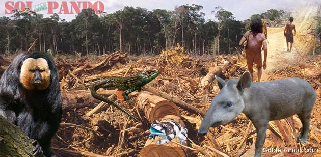 Especies en deforestacion