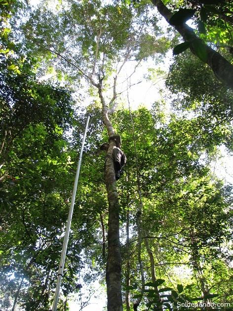 La investigación desarrollada en 35 hectáreas permitió identificar aproximadamente 1.000 especies de árboles. | Foto: V. Vos