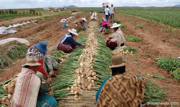 La superficie cultivada en la campaña de verano es la más importante en Bolivia. | Foto La Prensa