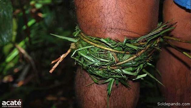 Un vendaje vegetal para curar un golpe en la rodilla. | Foto Acaté