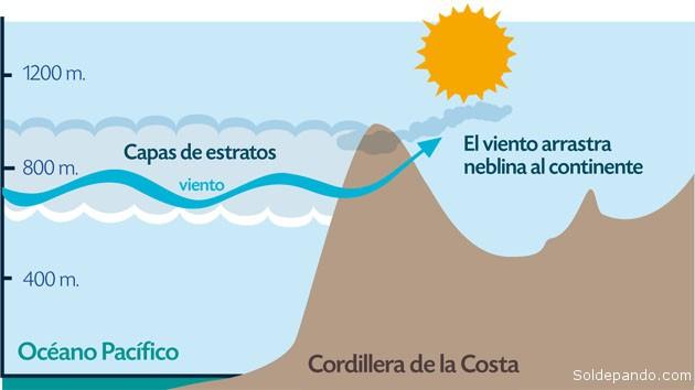 """EXPLOTAR LAS NEBLINAS """"CAMANCHACAS"""" Los científicos chilenos creen posible iniciar una nueva fase de desarrollo del desierto de Atacama a través de un cambio en la fuente de obtención del agua en su estructura freática. La candidata con mejores posibilidades para los especialistas es la camanchaca. La camanchaca (del aimara: kamanchaka, """"oscuridad"""") es un tipo de neblina costera, dinámica y muy copiosa. Se trata de condensación en altura que se mueve hacia zonas costeras por el viento y se produce gracias al anticiclón del Pacífico. Específicamente, durante el día el mar absorbe calor irradiado por el sol actuando como moderador térmico. Durante la noche y la madrugada libera este calor, que a la vez produce vapor. Este vapor en la mañana no sube lo suficiente a causa del anticiclón del Pacífico, este vapor permanece y es exactamente igual que la vaguada costera, o niebla costera. A medida que transcurre el día esta vaguada se calienta con el sol y se eleva, como nube orográfica, la que finalmente es dispersada por la alta presión del anticiclón del Pacífico. En algunos lugares de la costa chilena se usan dispositivos, llamados atrapanieblas, para captar agua de la camanchaca obteniendo excelentes resultados. Es así como se aseguraría que con solo 4% de la humedad anual acumulada a partir de esta fuente se podría cubrir la demanda minera, agrícola y urbana del Norte de Chile. Entretanto no se desarrolle esa nueva tecnología, a Chile no le queda otra alternativa que seguir utilizando las aguas bolivianas del Silala."""