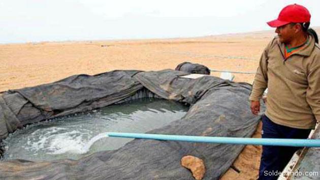 En Pampa Concordia, cerca de Arica, el agua fluye a razón de 75 litros por segundo desde los pozos subterráneos. Pero estos no serán recargados probablemente hasta miles de años más. | Foto El Mercurio
