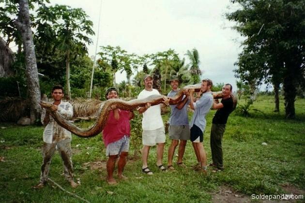 Una gigantesca anaconda exhibida y luego liberada por visitantes que disfrutaban el turismo de aventura en Rurrenabaque. | Foto Ryan Slender